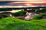 Marineland, Florida: Sunrise at the Beach with Algae Covered Rocks Photographic Print by Brad Beck
