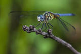 A Dragonfly in the Jean Lafitte National Historical Park and Preserve, New Orleans, Louisiana Photographic Print by Karine Aigner