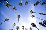 Palm Trees and Sky in Santa Barbara California Photographic Print by Bennett Barthelemy