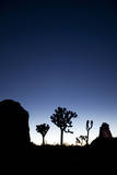 Joshua Trees Silhouetted Against the Night Sky at Dusk in Joshua Tree National Park, California Photographic Print by Ben Herndon