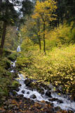 A View of Waukeena Falls in Oregon's Columbia River Gorge with Fall Colors Photographic Print by Bennett Barthelemy