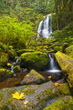 Autumn Colors and Lush Greens Highlight Upper Kentucky Falls in Oregon's Coastal Range Photographic Print by Patricia Davidson
