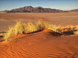 Red Colored Sand Dunes and Golden Grasses in the Namibrand Desert, Namibia Photographic Print by Frances Gallogly