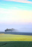 Morning Mist over Agricultural Fields and Trees in France Photographic Print by Francesco Carovillano