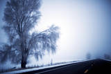 An Ice Encrusted Tree and Thick Fog in the Morning after a Snowstorm in North Central Oregon Photographic Print by Bennett Barthelemy
