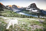 Mountain Goat at Hidden Lake, Utah Photographic Print by Lindsay Daniels