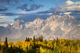 Fall Aspen Leaves Stand Beneath the Teton Mountains in Grand Teton National Park, Wyoming Photographic Print by Mike Cavaroc