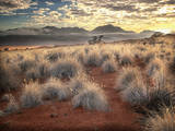 Morning Light over Desert Dunes, Mountains and Sun-Lit Grasses in the Namibrand, Namibia, Sw Africa Photographic Print by Frances Gallogly