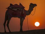 Camel Silhouetted Against the Setting Sun in the Thar Desert Near Jaisalmer, India Photographic Print by Frances Gallogly