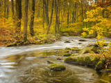 Babbling New England Brook over a Rocky Stream Bed Amongst Colorful Fall Foliage Photographic Print by Frances Gallogly