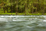 The Quinault River Flows by the Vivid Green Rain Forests of the Olympic National Park in Washington Photographic Print by Ben Herndon