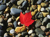 USA, Maine, a Maple Leaf on a Rock Background Photographic Print by  Jaynes Gallery