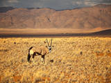 An Oryx Poses in the Morning Sunlight by a Mountain Range in the Namib Desert, Namibia Photographic Print by Frances Gallogly