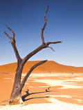 Camelthorn Tree in Dead Vlei, Namibia Photographic Print by Frances Gallogly