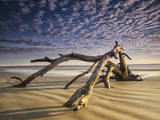 Looking Like a Sea Serpent, a Piece of Driftwood on the Beach at Dawn in Jekyll Island, Georgia Photographic Print by Frances Gallogly