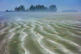 Mist on the Beach in Tofino, British Columbia, Canada Photographic Print by Arnab Banerjee