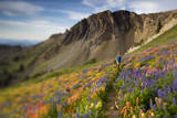 A Woman Enjoys a Morning Trail Run in a Meadow of Wildflowers at Snowbird Ski and Summer Resort, Ut Photographic Print by Adam Barker