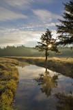 Beautiful Morning Light Along a Southern Oregon Creek Photographic Print by Patricia Davidson