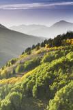 Fall in Big Cottonwood Canyon, Utah Photographic Print by Lindsay Daniels