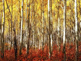 Autumn Colors Up in the Wasatch Mountains of Utah Photographic Print by Mitch Johanson