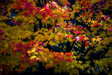 Fall Bloom in Rochester New York Photographic Print by Tom Kredo