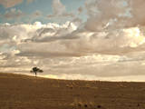 Solitary Tree in the Namib Desert on a Cloudy Day in Namibia Photographic Print by Frances Gallogly