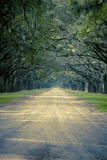 Savannah, Georgia: a Dirt Road Lined with a Canopy of Oak Trees at the Wormsloe Estate Photographic Print by Brad Beck