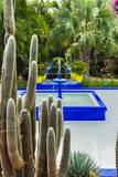 Jardin Majorelle, Marrakech, Morocco Photographic Print by Nico Tondini