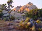 USA, California, Joshua Tree National Park Photographic Print by  Jaynes Gallery
