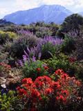 USA, California, Sierra Nevada, Wildflowers in the High Sierra Photographic Print by  Jaynes Gallery