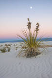 USA, New Mexico, White Sands National Monument. Moon over Yucca Plant Photographic Print by  Jaynes Gallery