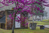 USA, Georgia, Savannah, Red Bud Tree in Colonial Park Cemetery Photographic Print by Joanne Wells