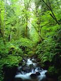 USA, Oregon, a Stream in an Old-Growth Forest Photographic Print by  Jaynes Gallery