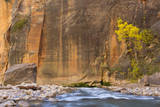 USA, Utah, Zion National Park. the Narrows of the Virgin River Photographic Print by Jamie & Judy Wild