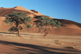 Acacia Trees in Elim Dune, Namib-Naukluft, Namibia Photographic Print by Charles Crust
