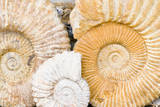 Jurassic Ammonite Fossils for Sale, Medina, Marrakech, Morocco Photographic Print by Nico Tondini