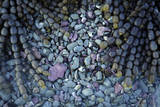 Neptune's Necklace and Stones on Kaikoura Coast, New Zealand Photographic Print by David Wall