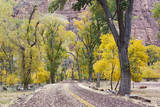 USA, Utah, Zion, Zion Canyon Scenic Road with Cottonwood Trees Photographic Print by Jamie & Judy Wild