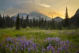 USA, Washington. Lupine and Mt. Rainie, Indian Henry's Hunting Ground Photographic Print by Gary Luhm