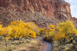 USA, Utah, Capitol Reef, Sulpher Creek, Trees and Waterpocket Fold Photographic Print by Jamie & Judy Wild