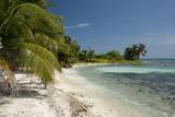 Belize, Caribbean Sea, Stann Creek District. Laughing Bird Caye Fotografisk tryk af Cindy Miller Hopkins