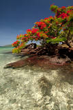 Christmas Tree at Vonu Point, Turtle Island, Yasawa Islands, Fiji Photographic Print by Roddy Scheer
