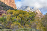 USA, Utah, Zion National Park, Cottonwood Trees in Zion Canyon Photographic Print by Jamie & Judy Wild
