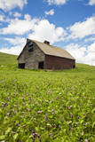 USA, Washington, Palouse. Old, Red Barn in Field of Chickpeas (Pr) Photographic Print by Terry Eggers