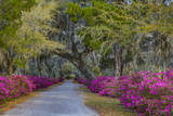 USA, Georgia, Savannah, Azaleas in Historic Bonaventure Cemetery Photographic Print by Joanne Wells