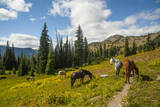 Washington, North Cascades, Slate Pass. Horses and Mules Foraging Stampa fotografica di Steve Kazlowski
