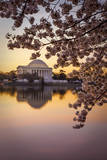 Cherry Blossoms and the Jefferson Memorial, Washington Dc, USA Photographic Print by Brian Jannsen