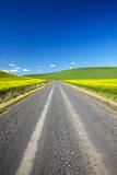 USA, Washington, Palouse. Backcountry Road Through Canola Fields Photographic Print by Terry Eggers