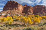 USA, Utah, Capitol Reef, Cottonwood Trees and Waterpocket Fold Photographic Print by Jamie & Judy Wild