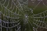 USA, Georgia, Savannah, Dew Drops on Spider a Web Photographic Print by Joanne Wells